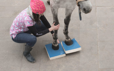 SURE FOOT® Equine Stability Program